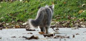 cat___from_behind_by_weissertiger2-d64mvu1